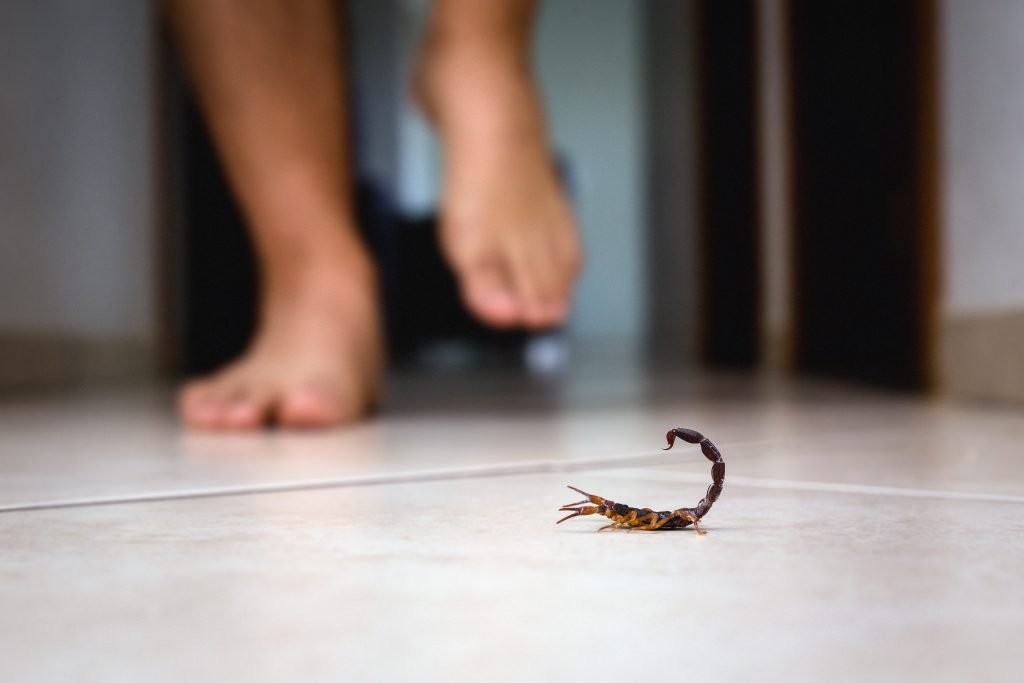 scorpion control mesa